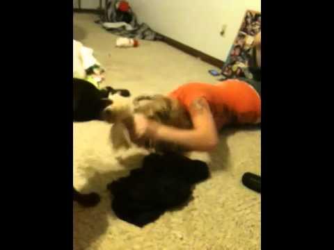 boob punching videos