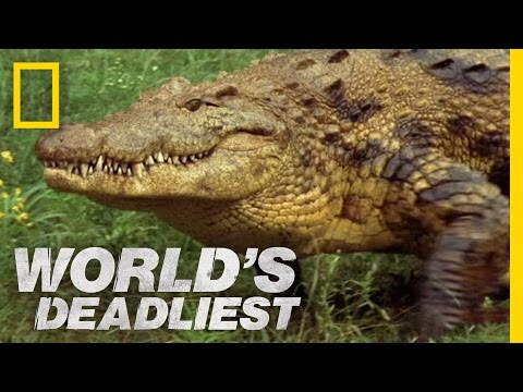 World's Deadliest - Croc Trap