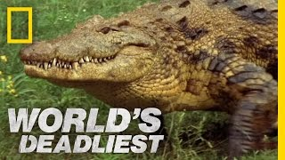 (3.07 MB) Croc Trap | World's Deadliest Mp3