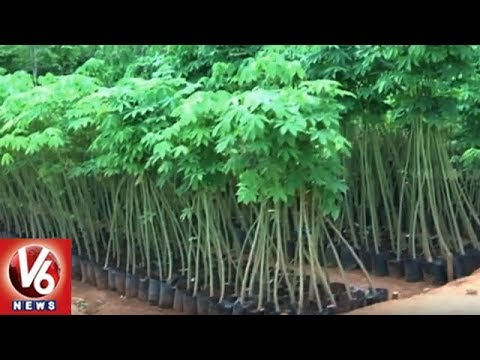 GHMC Targets Planting Of 40 Lakh Saplings In Haritha Haram 4th Phase | V6 News