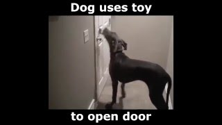 Smart dog unlocks door