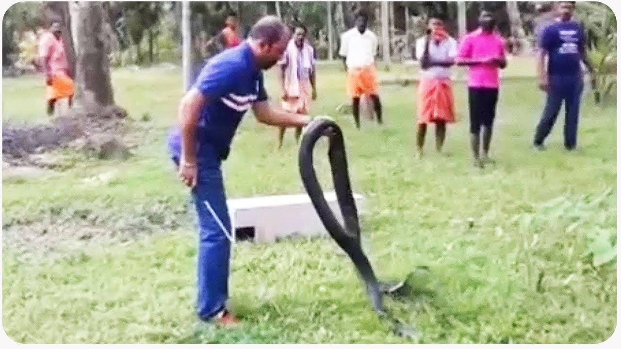 Rescuing King Cobra from Village  Snake Whisperer - YouTube
