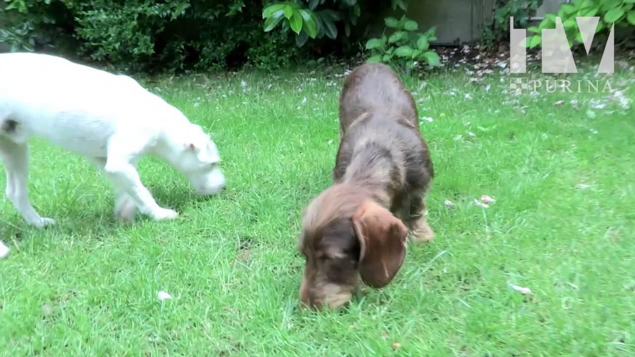 Comment couper les poils sous les coussinets de son chien - Comment couper les griffes de son chien ...