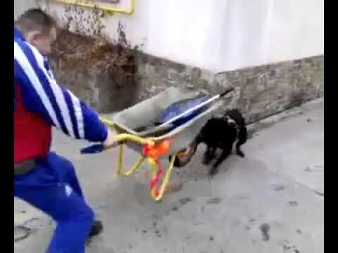 Пес напал на тачку! Прикол!