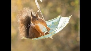 8 photo scenes of red squirrels