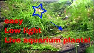 10 very easy low light live aquarium plants for beginners and pros alike