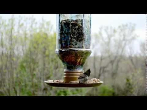 Wild Bird House : Chipping Sparrow Black Capped Chickadee Back Yard Bird Feeding