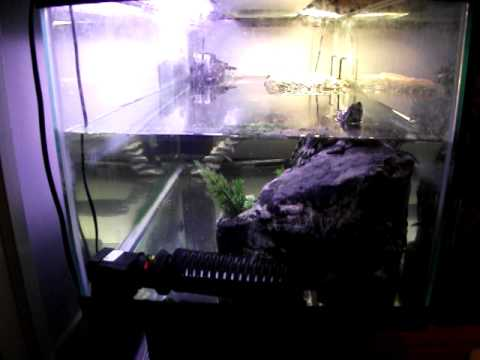 Updated 40 gallon turtle tank - red eared slider