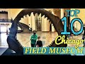 """Top 10 """"MUST SEE"""" at the FIELD MUSEUM! - Chicago's Field Museum's best exhibits."""