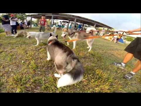 Bulacan Dog Walkers 1st Anniversary