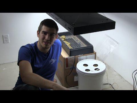 World's Most Simple $5 Diy Hydroponic Setup Quick Ez &amp  Cheap