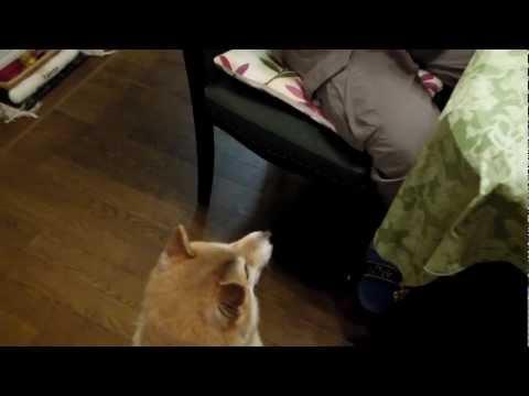 柴犬にマジックを見せてみたら・・・(;゚Д゚)!