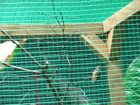 ハチドリ  東山動物園メダカ館
