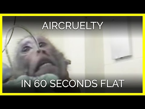 AirCruelty in 60 Seconds