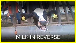 Milk in Reverse