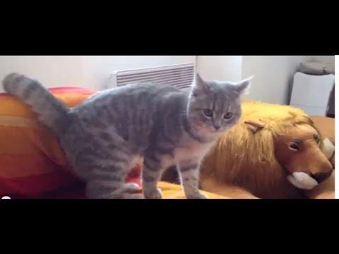 失敗しても超カワイイ!!忍者トリックを見せる猫