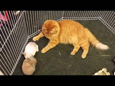 Rabbits mistaken for kittens by caring cat