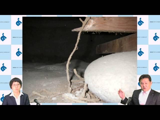 シロアリQ&A シロアリは木のにおいで寄ってくるってホント?