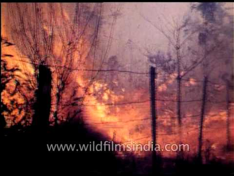 F.W. Champion : File footage of fire destruction