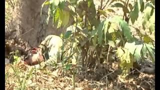 Download Raw video: Naxals attack CRPF men in Chhattisgarh, 20 killed 3Gp Mp4