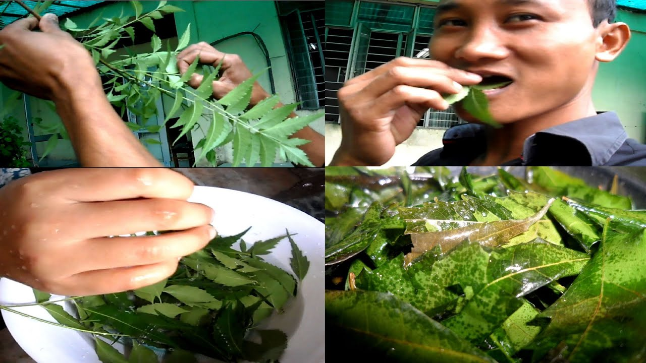Fatty Liver Or Kidney Problems Treat It With Neem Leaves