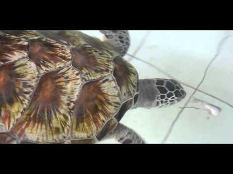 TCEC (Turtle Conservation and Education Center ) Serangan, Bali