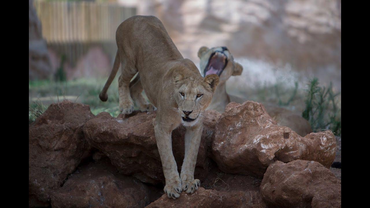 Morocco in motion le jardin zoologique de rabat maroc for Le jardin zoologique