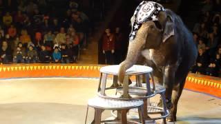 Национальный Цирк Украины - Шоу Слоны-великаны в Киеве 01.03.2014