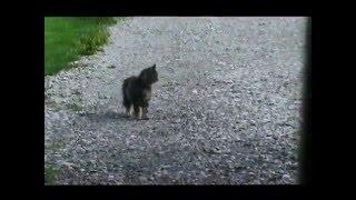 Cat waits for school bus