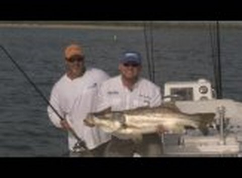 Man Handlin Snookin! Port St. Lucie, Stuart Snook. Fishing Charters
