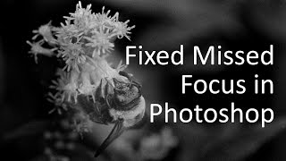 Fix (Slight) Missed Focus with Photoshop High Pass Filter