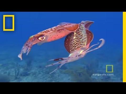 Exploring Oceans: Caribbean Gulf