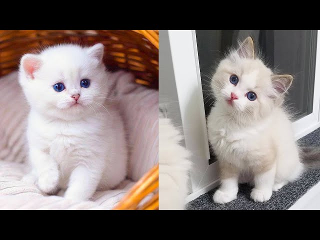 Play this video Baby Cats - Cute and Funny Cat Videos Compilation 34  Aww Animals