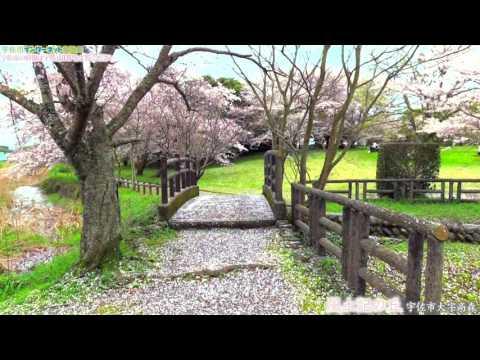 桜のおすすめスポット 宇佐市