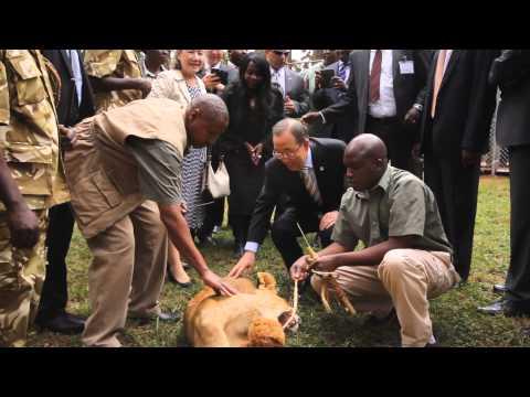 Ban Ki-moon Adopts a Lion Cub at the Nairobi National Park