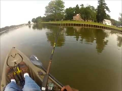 White Perch Honey Hole!