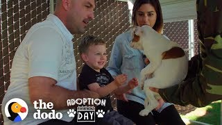 This Pittie Was Pregnant In A Shelter When She Found The Best Family  | The Dodo Adoption Day