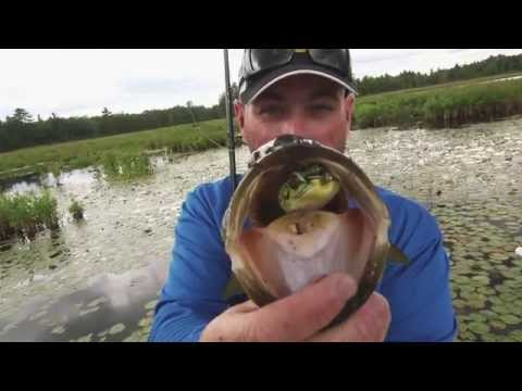 Busting Topwater Back Lake Bass - Dave Mercer's Facts of Fishing THE SHOW