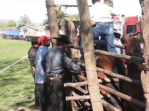 Domadura Patagua Orilla 19 de septiembre 2008