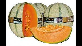 Meloni Terra Equa dal Senegal