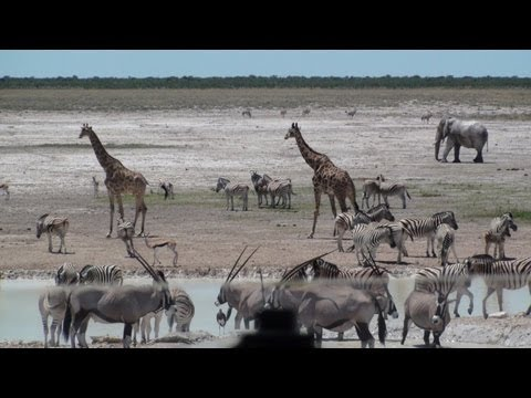 Elephant, Giraffe, Zebra, Springbok and Wilderbeest at Etosha National Park - Namibia
