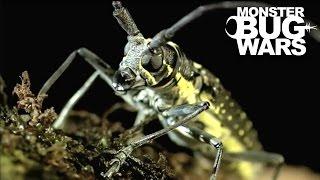 Longicorn Beetle vs  Flame Bellied Orb Weaver | MONSTER BUG WARS