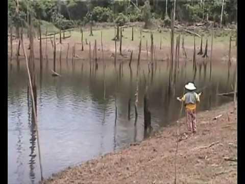 Wędkarstwo Na Amazonce.wmv