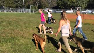 Worst Dog Ever, Dog Training Seminar Great Testimonial
