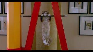 Jak zostać kotem online cda chomikuj zalukaj bez limitów (zobacz opis)