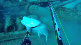 Spearfishing 1 Grouper out of South Florida