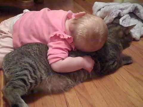 Kucing Paling Penyabar