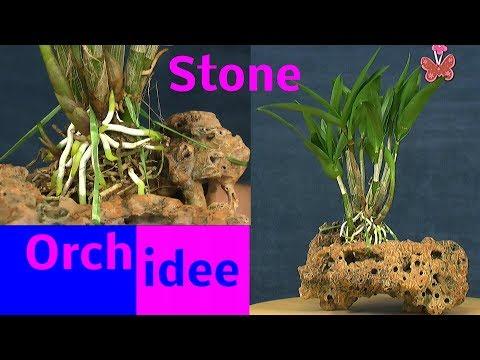 Orchideen Spezial auf dem Stein