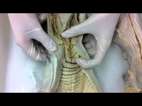 anatomia practica 1 aparato reproductor femenino par3