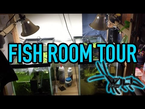 Fish Room Tour || My College Apartment Turned Into A Mini Fish Room!
